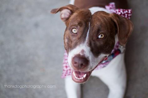 Photo courtesy Thank Dog Photography: http://thankdogphotography.com/
