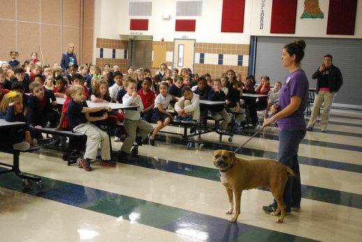 Sweetie earning her kibbles and schoolin' kids during a V4J presentation. Photo by the wonderful Lacey Phillips