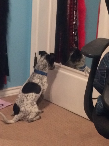Jeggings admire his reflection in his new home.